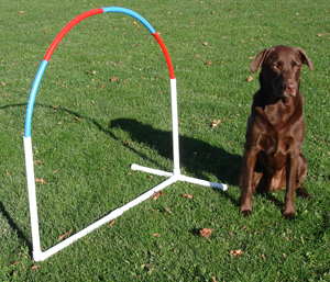 Design Your Own Dog Games